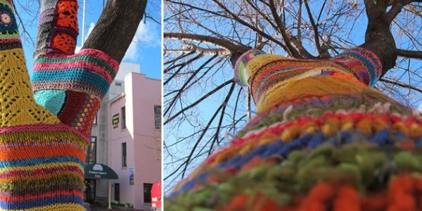 Sweaters Adorn Bloomington Trees